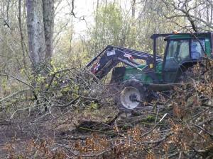 Déboisement de la zone de frayère, les végétaux seront broyés.