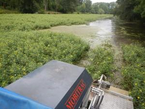 2014 - arrachage de la Jussie par bateau amphibie