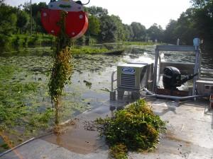 2012/2013 - arrachage de la Jussie par brge flottante et grappin