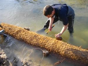 Végétalisation du pied de berge par boudin coco et pose de saules