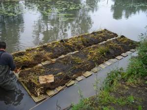2010-2012 : Mise en place radeaux flottants sur la jussie