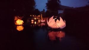 DSC_2288 -STINAT - lotus flottants illuminés sur la Cisselandaise