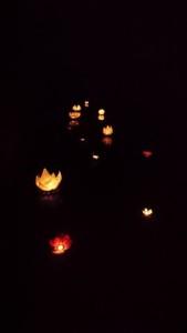 DSC_2306 - STINAT - cheminement de lotus lumineux Cisse landaise